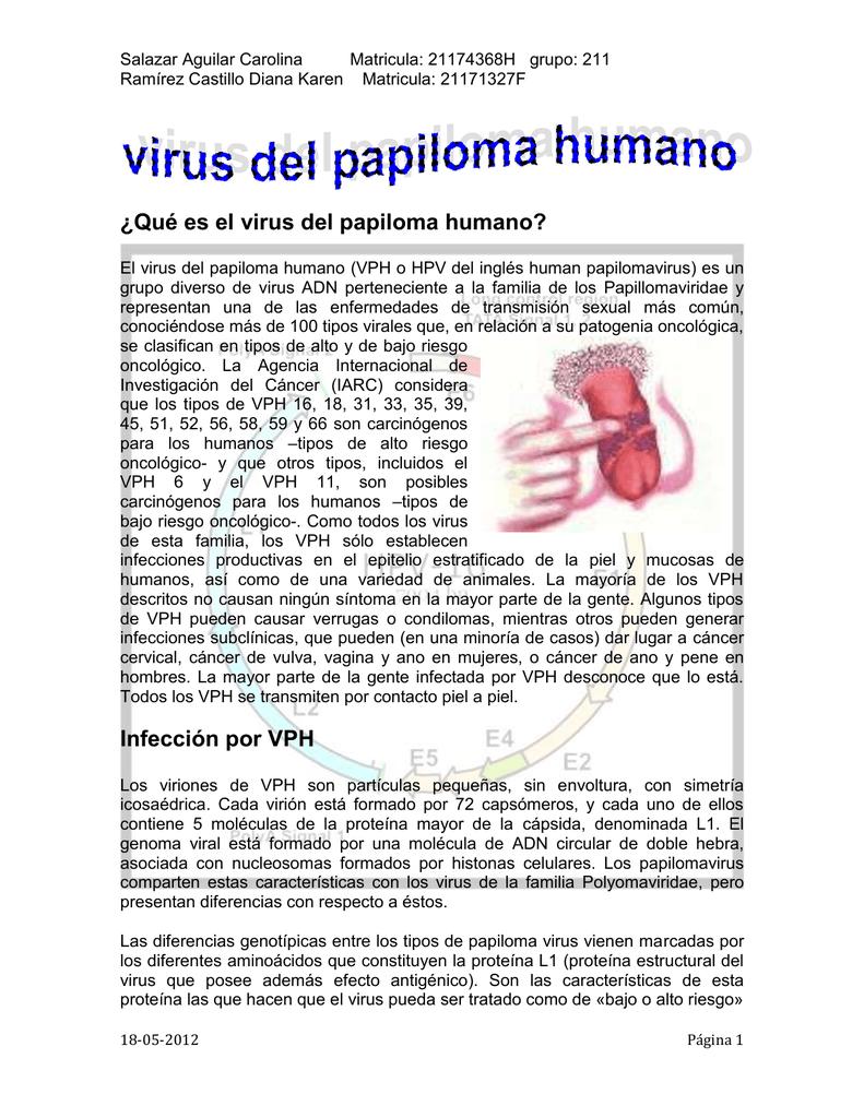 virus del papiloma humano caracteristicas papillon zeugma email