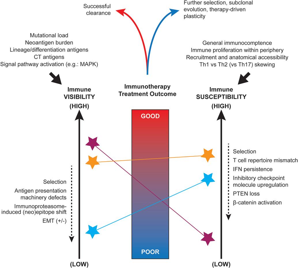 human papillomavirus diagnosis ppt hpv transmission from saliva