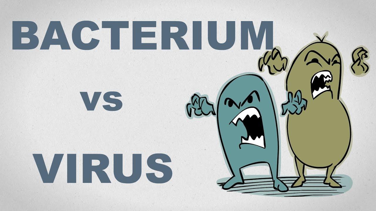 bacterie sau virus o papilomavirus humano e o principal causador do cancer