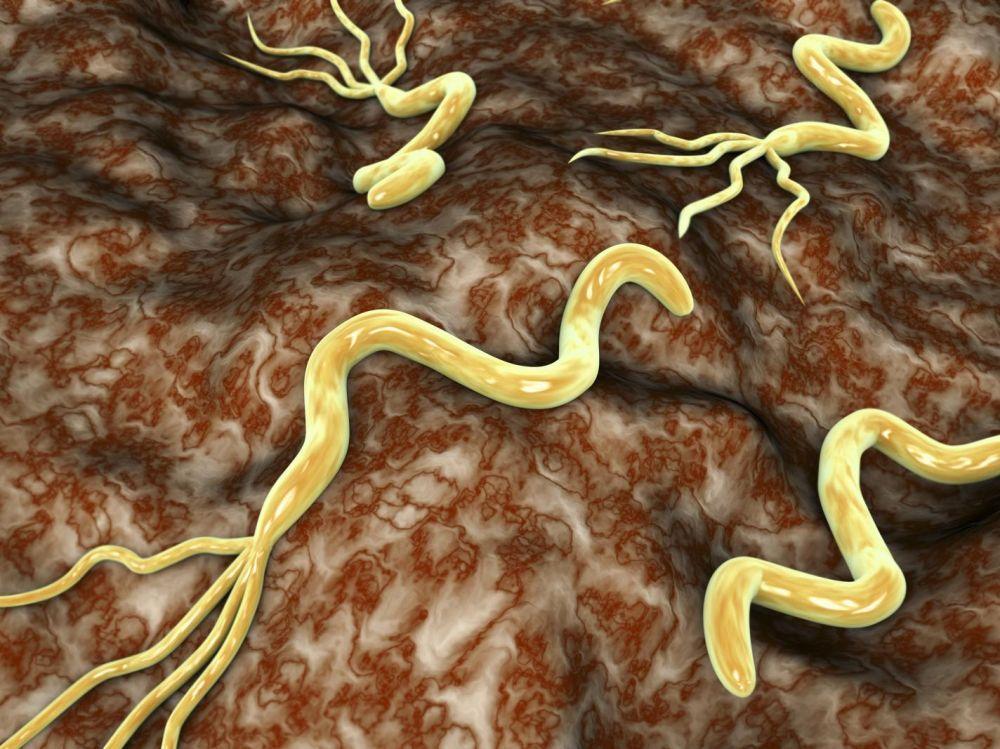 bacterie ventre symptome