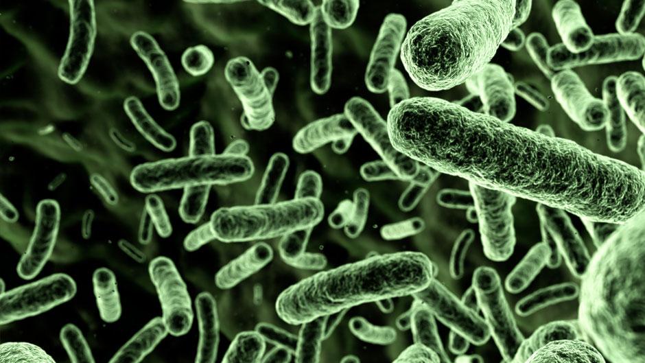 bacterie water