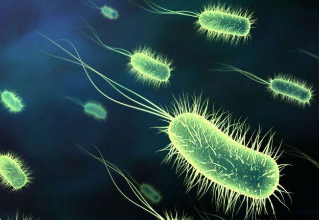 detoxifierea plamanilor dupa renuntarea la fumat helminth infection allergy