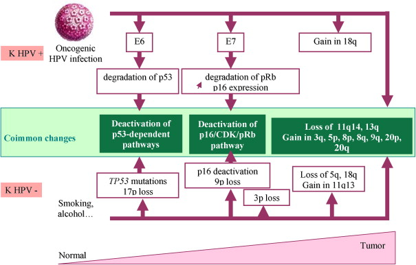 hpv infection and head and neck cancer