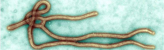 human papillomavirus infection cervical cancer