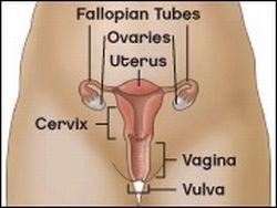 Semnele îngrijorătoare ale cancerului vulval