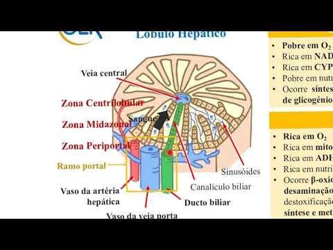 gejala human papillomavirus hpv virus type 18