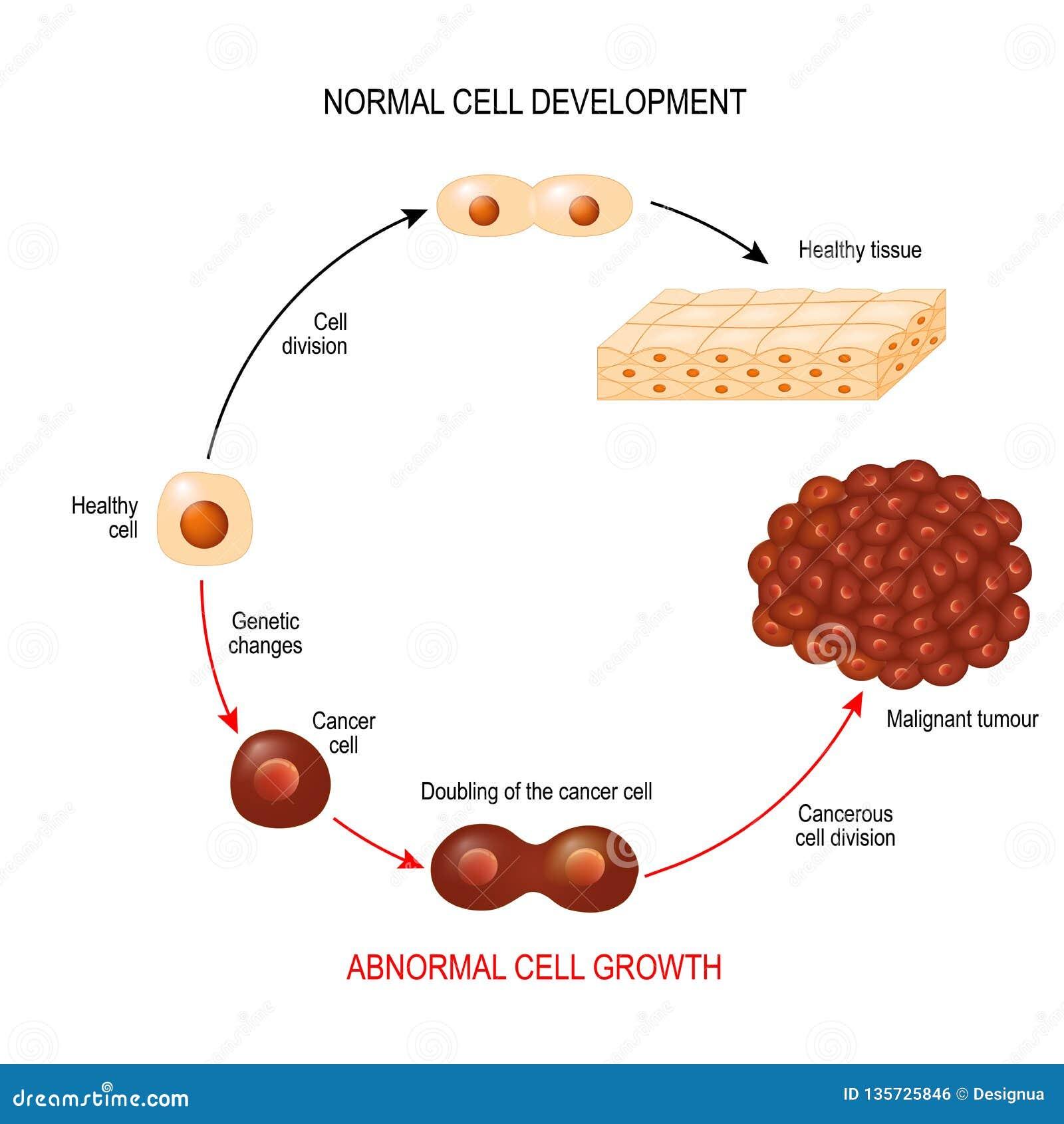 cancer cellule maligne virus del papiloma bebes