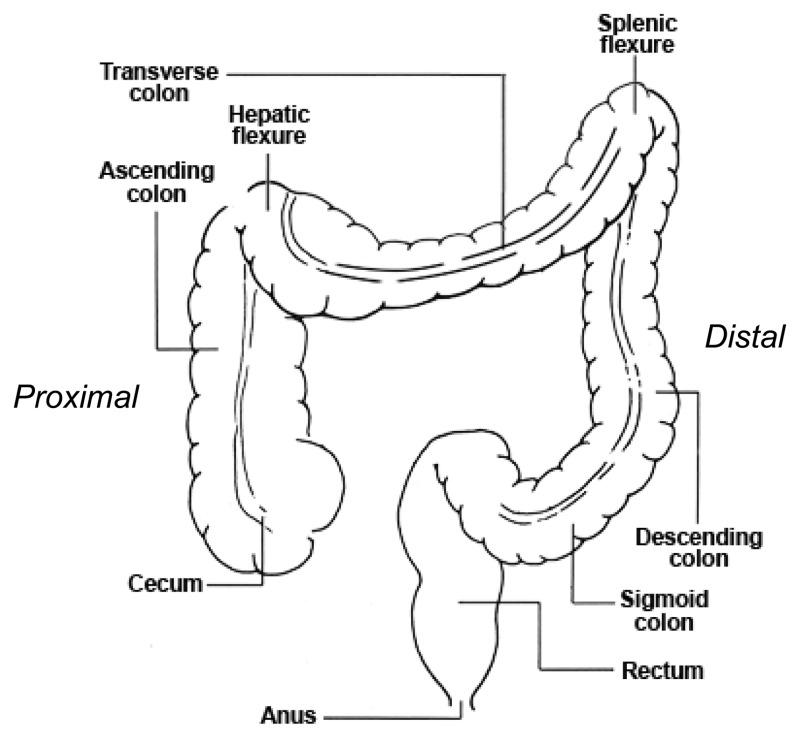 cancer of hepatic flexure