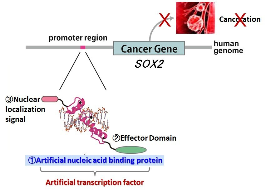 esophageal cancer genetic link