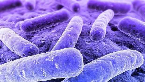 bacterii klebsiella warts treatment dubai