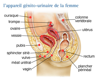 cancer feminin de la vessie