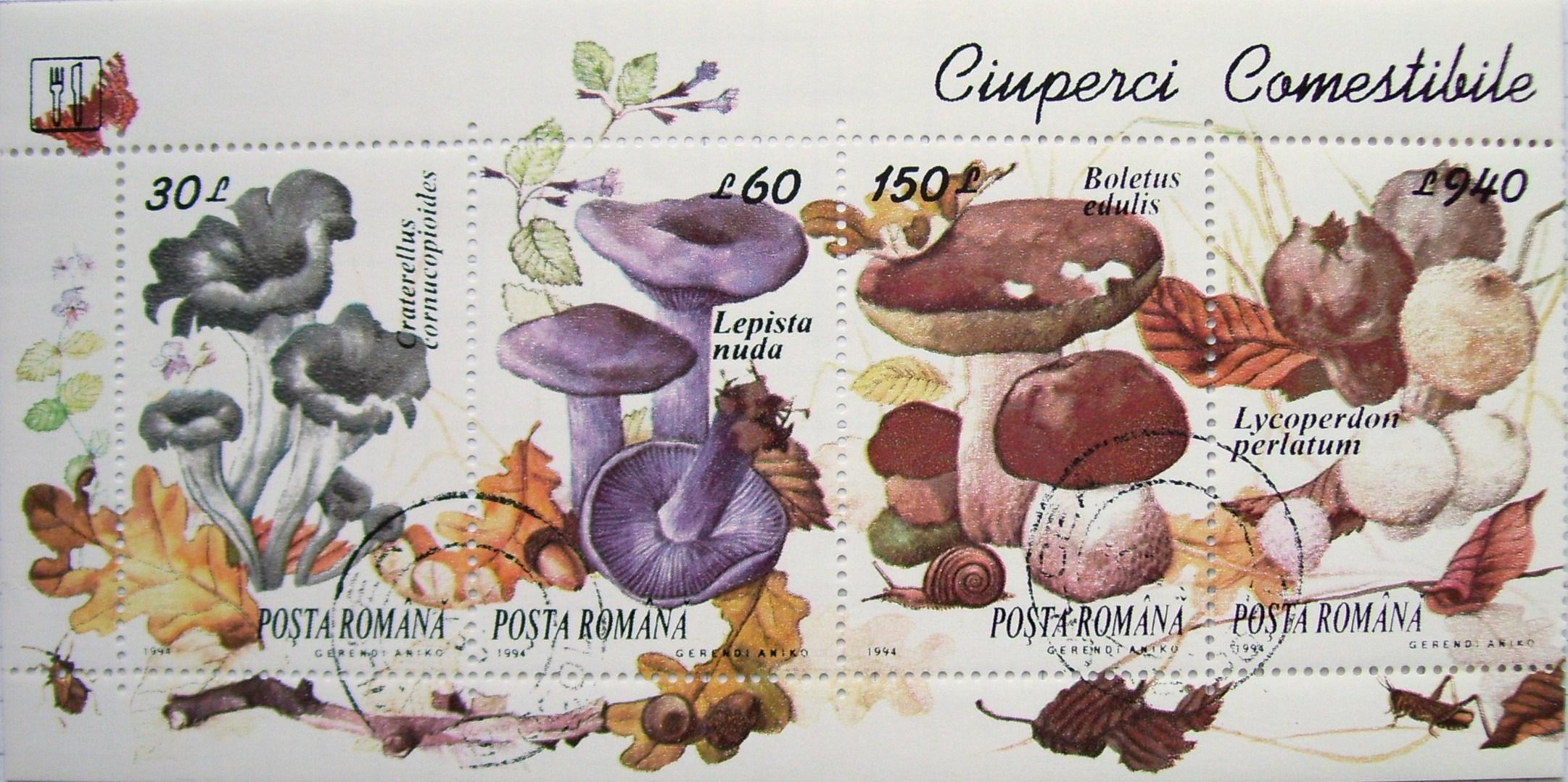 Ciuperci comestibile - Wikipedia