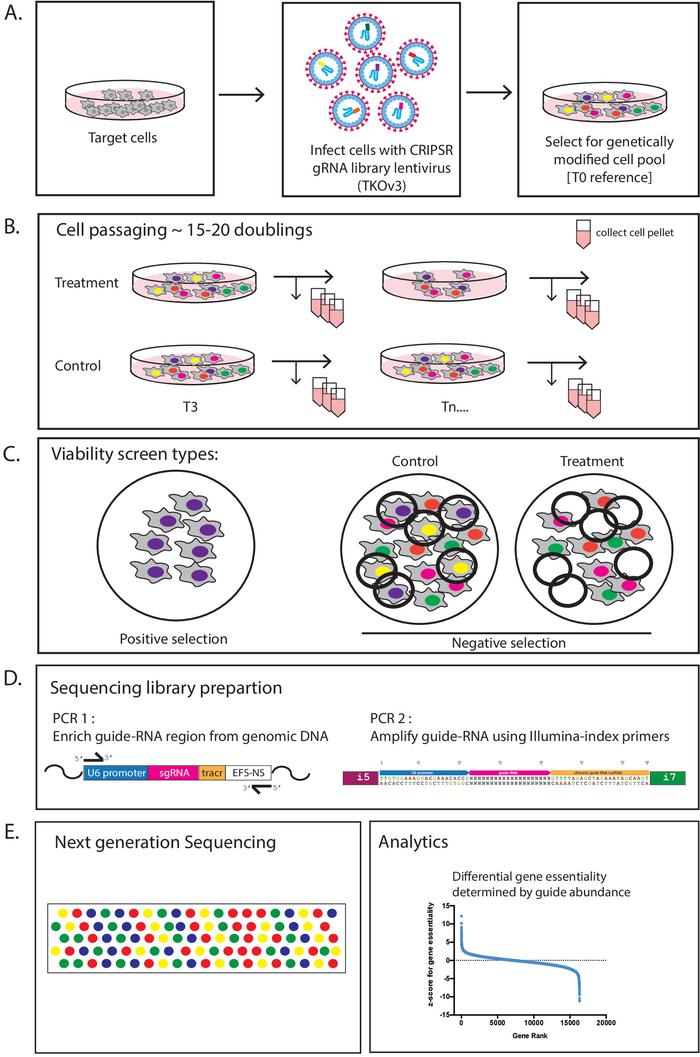 Dușmanii genelor și sprâncenelor: acarienii