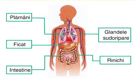 detoxifierea ficatului si fierei