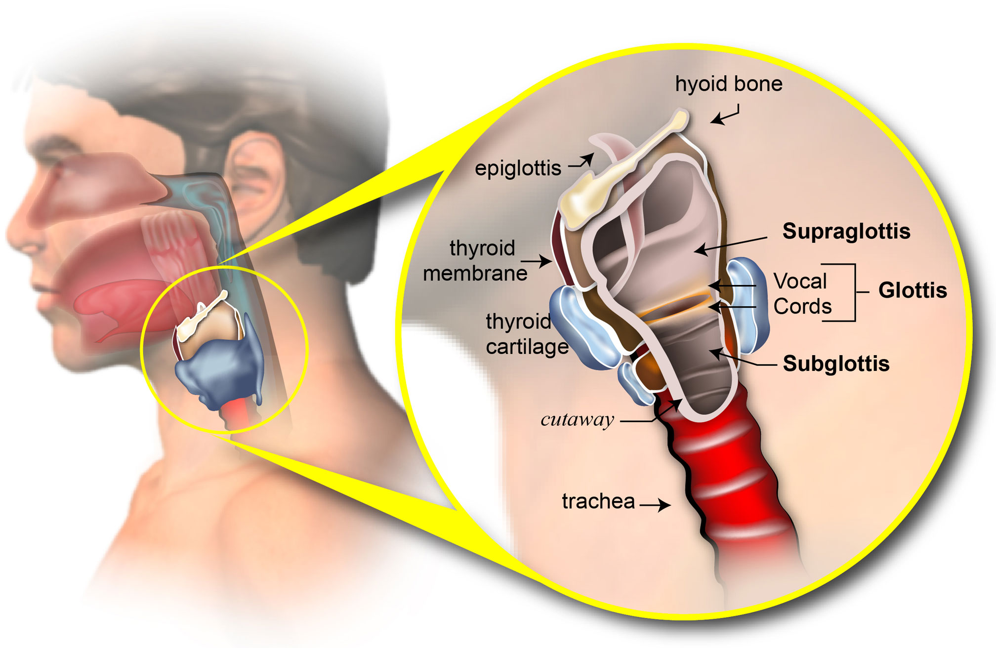papillary thyroid cancer less than 1 cm rectal cancer kanker