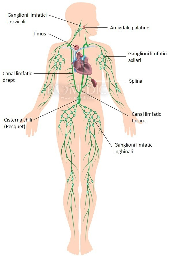 Cura de detoxifiere a limfei -