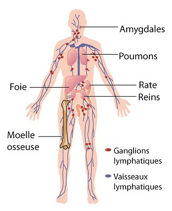 body hpv virus enterobiasis sintomas y tratamiento