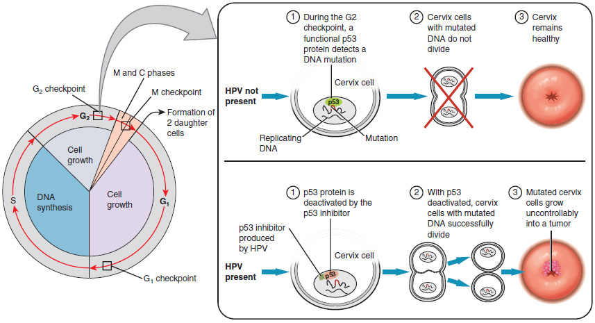 hpv virus cervix symptoms