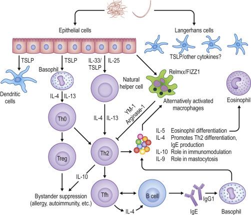 helminth host immune
