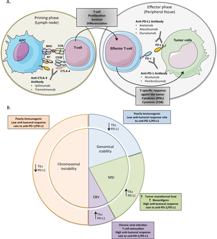 gastric cancer and immunotherapy