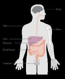 hodgkin cancer curable cancerul la ficat doare