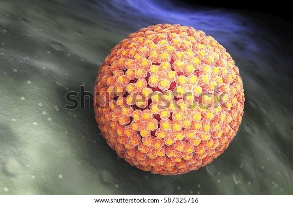 virus del papiloma labios genitales
