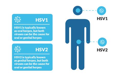 virus hpv utero papillomavirus femme demangeaisons