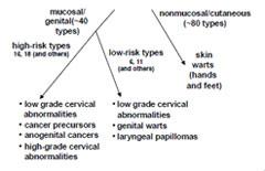 human papilloma types hpv under skin