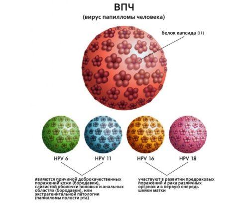 human papillomavirus 18 type