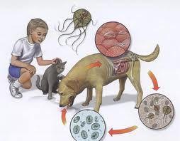 infectie cu helminti