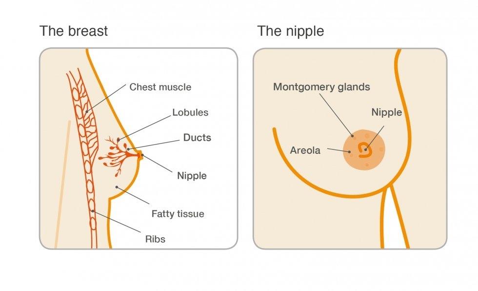Descărcarea sânilor și niplulor, ce înseamnă acest lucru   Health Life Media