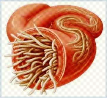 limbrici simptome
