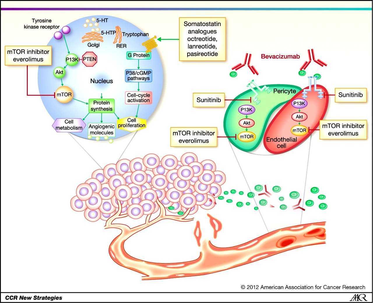 neuroendocrine cancer night sweats