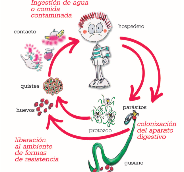 intestinal helminth infestations viermisori copii tratament