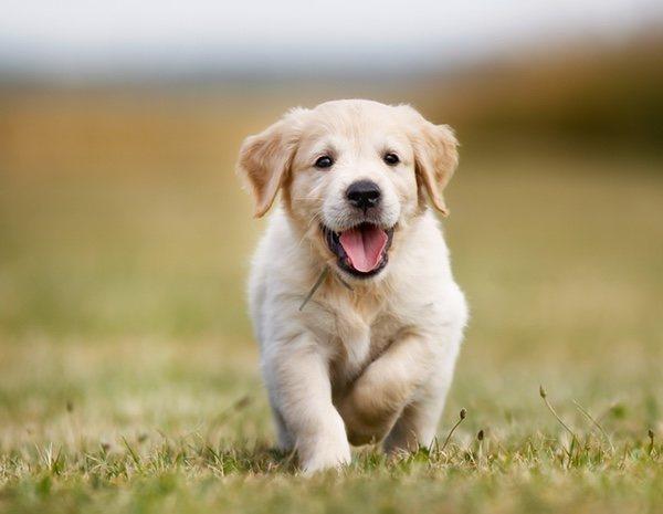 oxiuros y perros