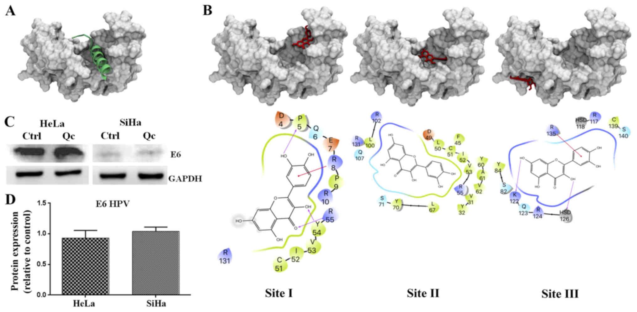 hpv virus test kit viermi jardia