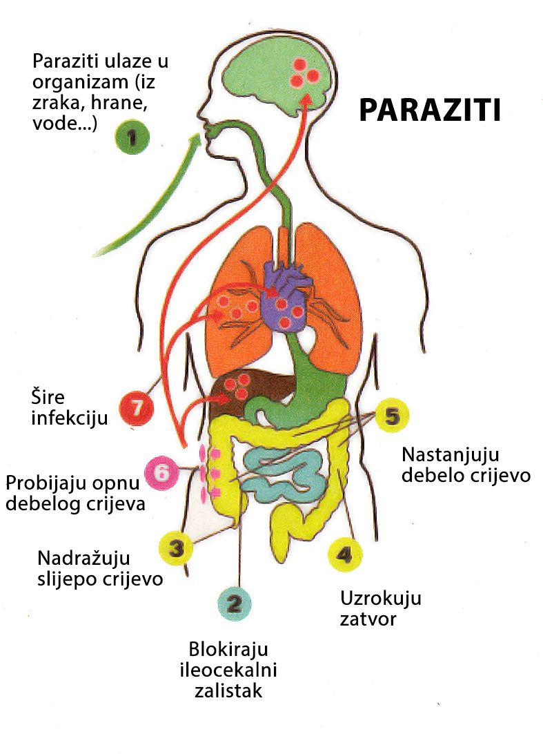 transmission papillomavirus preservatif warts genital cure