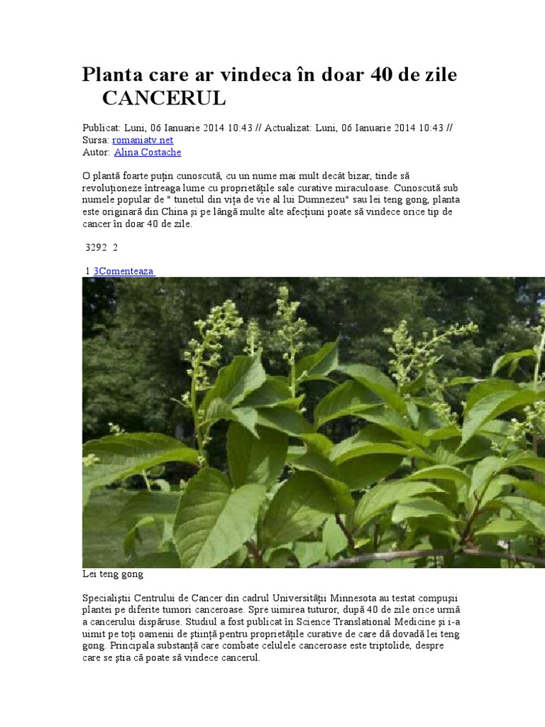 planta care vindeca cancerul in 40 de zile