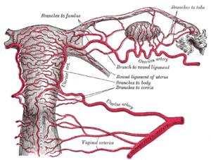 Cancerul testicular – simptome, tratament