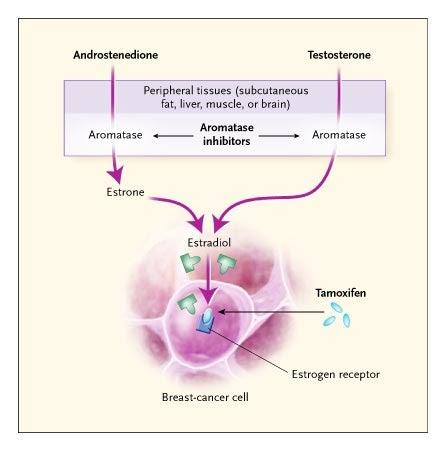 Legătura dintre tamoxifen şi cancerul uterin. Ce trebuie să ştie pacientele