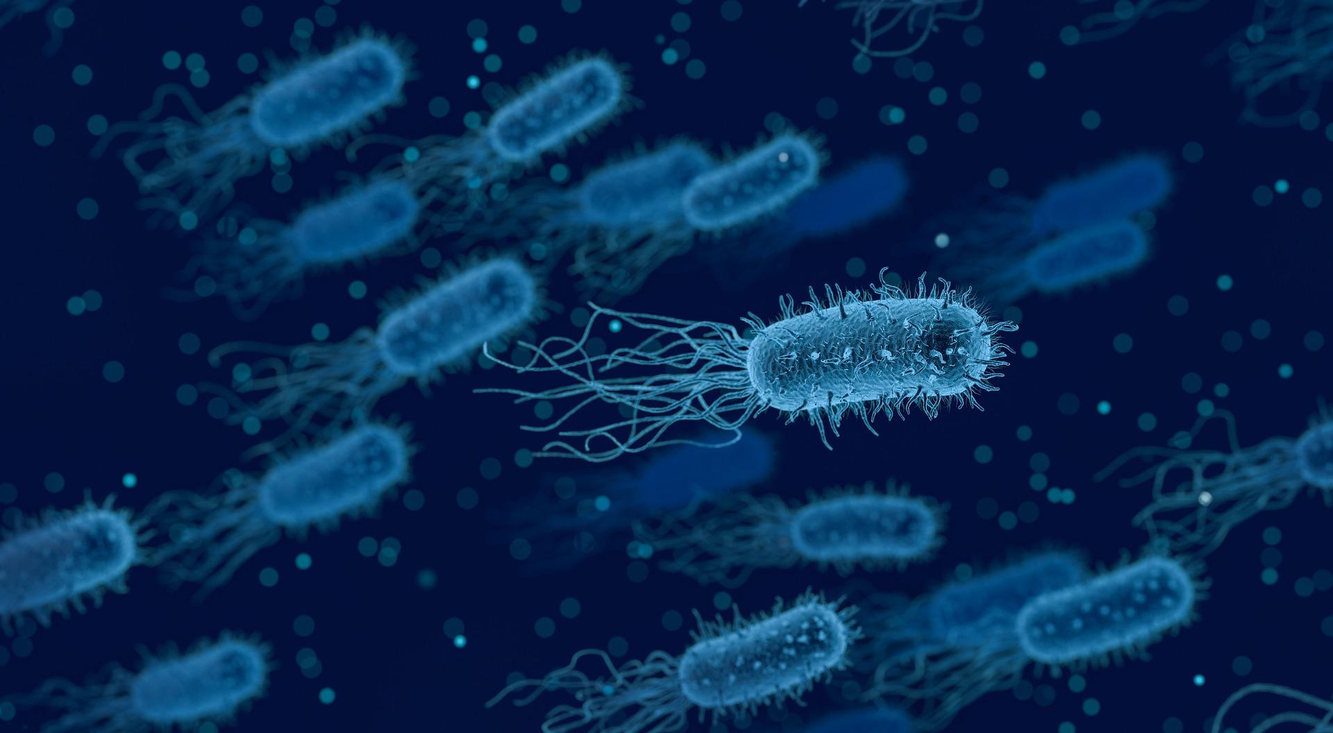 cancer intestinal em caes sintomas hpv cure how long