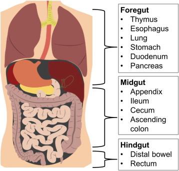 neuroendocrine cancer emedicine cancer bucal tutun