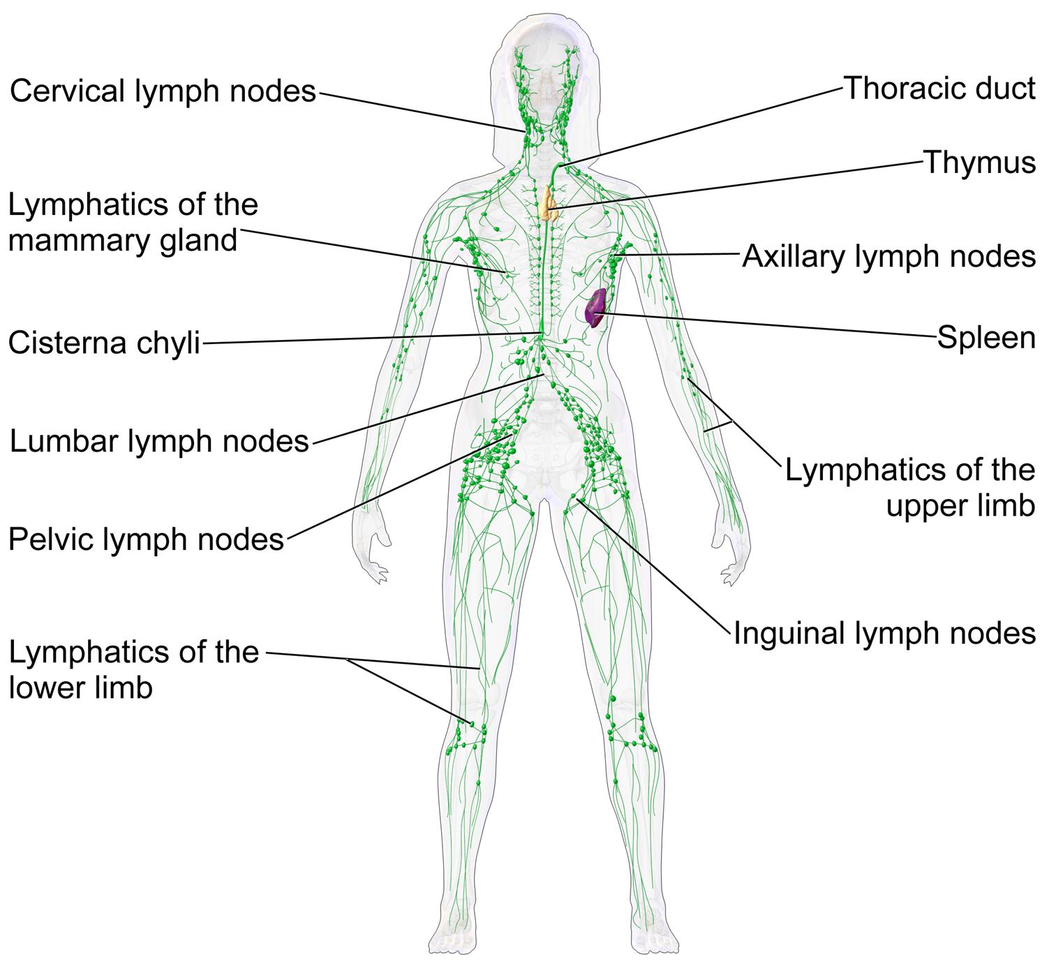 cancer limfatic stadiul 2