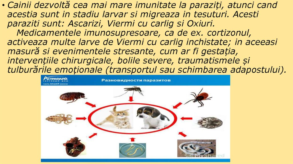 Viermii Si Parazitii Intestinali La Om