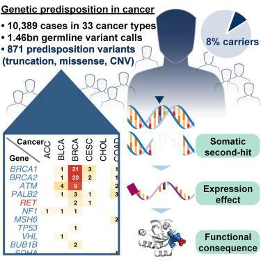 Gena APC - implicarea în cancerul colorectal by Krisz Pál on Prezi