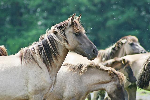 Deparazitarea interna la caini. De ce este importanta?