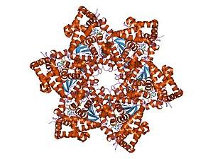 human papillomavirus in a sentence virus del papiloma humano en hombres garganta