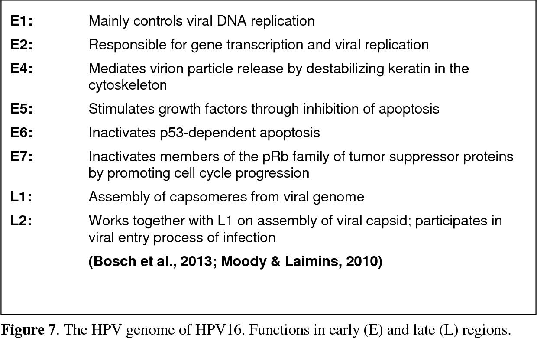 hpv papillomavirus cose