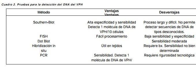 virus papiloma humano biologia