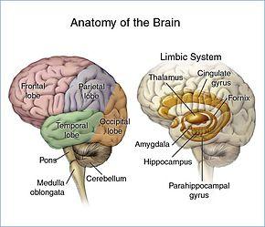 The Gerson Therapy | ImunoMedica